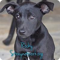 Adopt A Pet :: Rocky - Colmar, PA