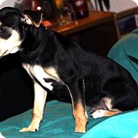 Adopt A Pet :: Eddy - Tijeras, NM