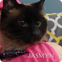 Adopt A Pet :: Jasmyn - Bucyrus, OH