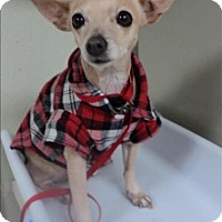 Adopt A Pet :: Daisy Mae - Escondido, CA