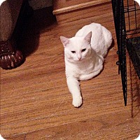 Adopt A Pet :: Kasper - McEwen, TN