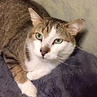 Adopt A Pet :: Melvin - Walled Lake, MI