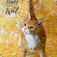Adopt A Pet :: Marcel - Wayne, PA
