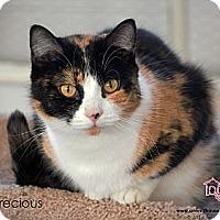 Adopt A Pet :: Precious - St Louis, MO