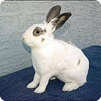 Adopt A Pet :: Julio - Phoenix, AZ