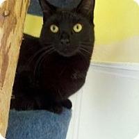 Adopt A Pet :: Lasagna - Richboro, PA