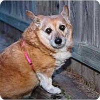 Adopt A Pet :: Roxas - Inola, OK