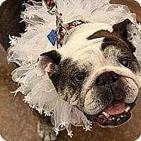Adopt A Pet :: Nelly - Chicago, IL