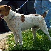 Adopt A Pet :: Eddie - Omaha, NE