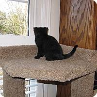 Adopt A Pet :: Kelsey - Harrisburg, NC