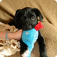 Adopt A Pet :: Bale - Huntsville, AL