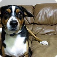 Adopt A Pet :: Jake - Meridian, ID