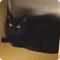 Adopt A Pet :: Ethan - Colmar, PA