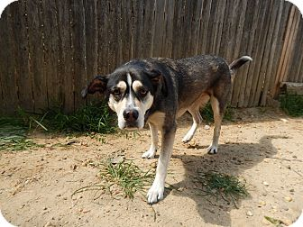 Husky/Shepherd (Unknown Type) Mix Dog for adoption in Mantua, New Jersey - Neera