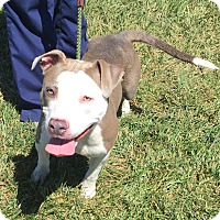 Adopt A Pet :: Precious - URGENT!! - Clarksville, TN