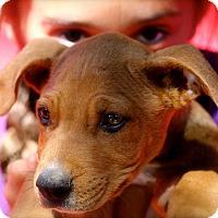 Adopt A Pet :: Chester - Naugatuck, CT