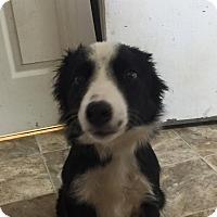 Adopt A Pet :: Icicle - Lewisburg, TN