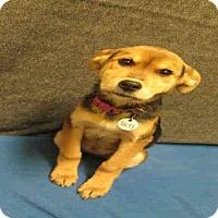 Adopt A Pet :: *AURA - Upper Marlboro, MD