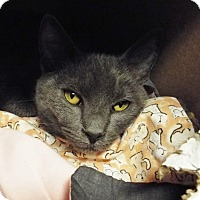 Adopt A Pet :: Mack - Grants Pass, OR