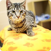 Adopt A Pet :: Twister - Appleton, WI