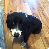 Adopt A Pet :: Pepper - Ogden, UT