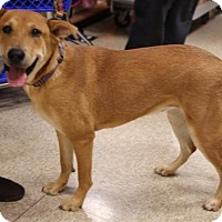 Adopt A Pet :: Regina - Olive Branch, MS