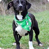 Adopt A Pet :: Prince Adoption Pending - Waldorf, MD