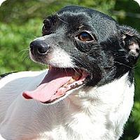 Adopt A Pet :: Stripe (12 lb) Happy Lil' Dude - SUSSEX, NJ