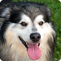 Adopt A Pet :: Duke - Westfield, NY