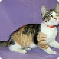 Adopt A Pet :: Shalimar - Powell, OH
