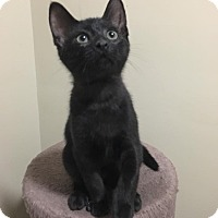 Adopt A Pet :: Topaz - Huntley, IL