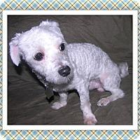 Adopt A Pet :: Adopted!!Hobie - IL - Tulsa, OK