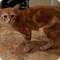 Adopt A Pet :: Rosetta - Glendale, AZ