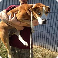 Adopt A Pet :: Ameerah - Beckley, WV