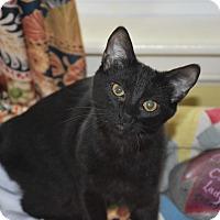 Adopt A Pet :: Claudette - Bristol, CT