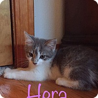 Adopt A Pet :: Hera - Irwin, PA