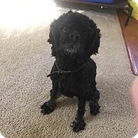 Adopt A Pet :: Dash - Kannapolis, NC