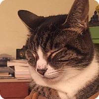 Adopt A Pet :: Favah - Novato, CA