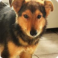 Adopt A Pet :: Monty - Germantown, MD