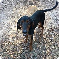 Adopt A Pet :: Jagger - Athens, GA