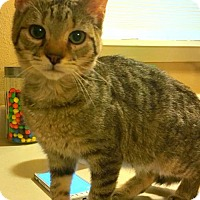 Adopt A Pet :: Mr Tickles - Indianapolis, IN