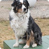 Adopt A Pet :: Brennan - Mechanicsburg, OH