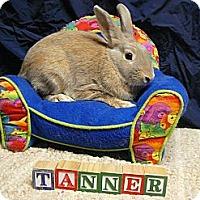 Adopt A Pet :: Tanner - Newport, DE