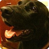 Adopt A Pet :: MAGGIE - Minnetonka, MN