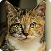 Adopt A Pet :: Lola - Athens, GA