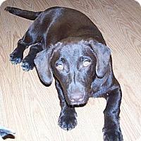 Adopt A Pet :: Chip - Conway, AR