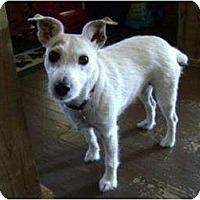 Adopt A Pet :: Skittles - Omaha, NE
