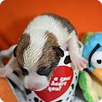 Adopt A Pet :: Caitlyn - Stilwell, OK
