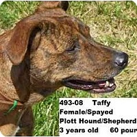 Adopt A Pet :: Taffy - RESCUED! - Zanesville, OH
