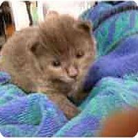 Adopt A Pet :: Ashley now Hercules - Manalapan, NJ